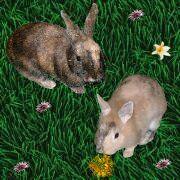 Bugsy und Wolli von der Ninchen Page