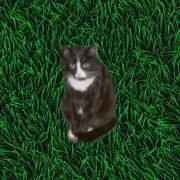 Renate�s Katzenm�dchen Chaco