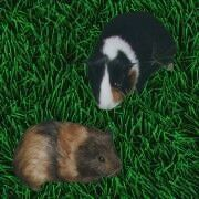 Marie und Nala von den Farmtieren