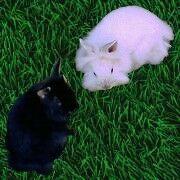 Skippy und Kimba von den Farmtieren