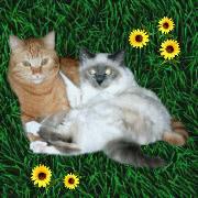 Gabi`s Charlie und Attila vom Katzenfantreff