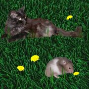 Power-Mieze Bonny und Hamstermann Clyde
