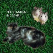 Fee, Hannibal und C�sar von Biene