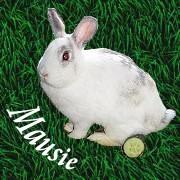 Angie`s Mausie