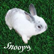 Snoopy aus Angie`s kleiner Welt