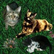 Sammy, P�ppi  und Mioh von Daggi