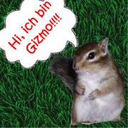 Gizmo, das Streifenh�rnchen