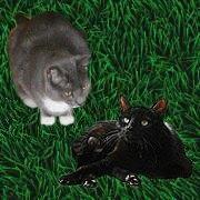 Gizmo und Blacky von Sonja und Andy