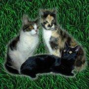Die Kampfkatzen Jumpy,Regenbogen-Spiggy und Kn�pfchen