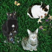 Schnecke, Spargel und Nasi aus der Katzenecke