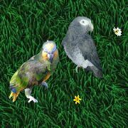 Lora und Leo von der Papageienbande