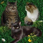 Meiti, Lucky und Daemon von den Doofnasen