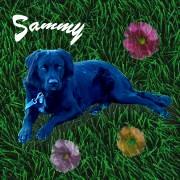 Sammy von Dinomami