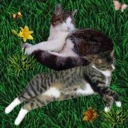 Doofnasen Tigi und Lilan