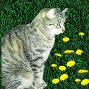 Gipsy`s Tinka ist Katze Nr.100 auf unserer Tierwiese!!