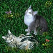 Wackel und Friedhelm aus der Katzenecke (Emma ist zu Luzifer�s Flicken auf Wiese Nr.5 umgezogen)