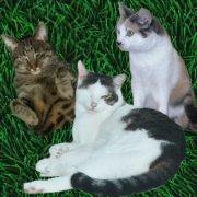Chewy, Haui und Lucky von Susi