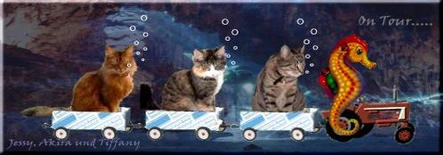 Mona und ihre Katzenbande