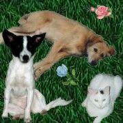 Robby, Kaja und Sally von Klee & Co.