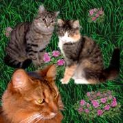 Mona`s Katzen Jessy, Akira und Tiffany