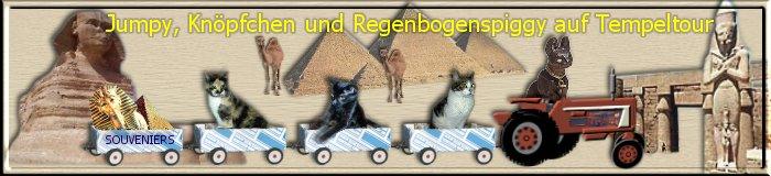 die Berliner Kampfkatzen