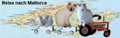 Alexandra`s cats on tour