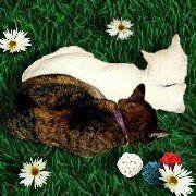 Patch und Fl�ckchen von den Rellinger Rosenkatzen