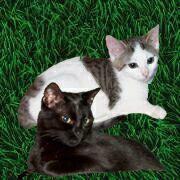 die Taschentiger Phoebe und Niko