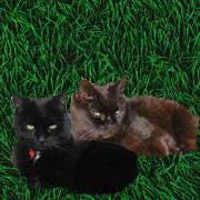 Lissy und Thompsy