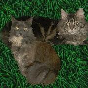 Gina und Kenzo vom Bremer Katzentheater